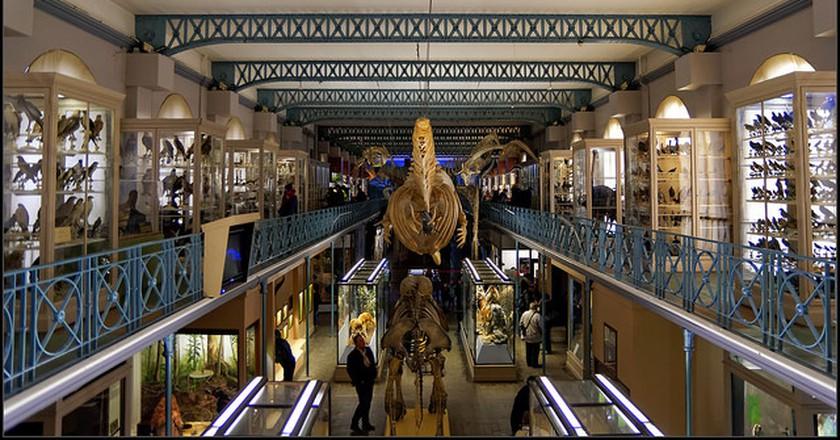 Musée d'Histoire Naturelle de Lille | ©Guillaume DELEBARRE/Flickr