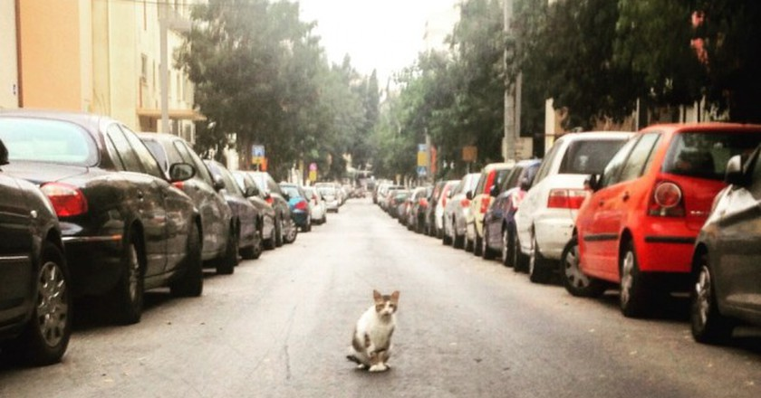 7 Essential Life Lessons Tel Aviv's Cats Can Teach Us