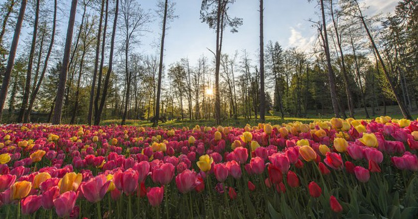 Volčji Potok Arboretum © Aleš Krivec/WikiCommons