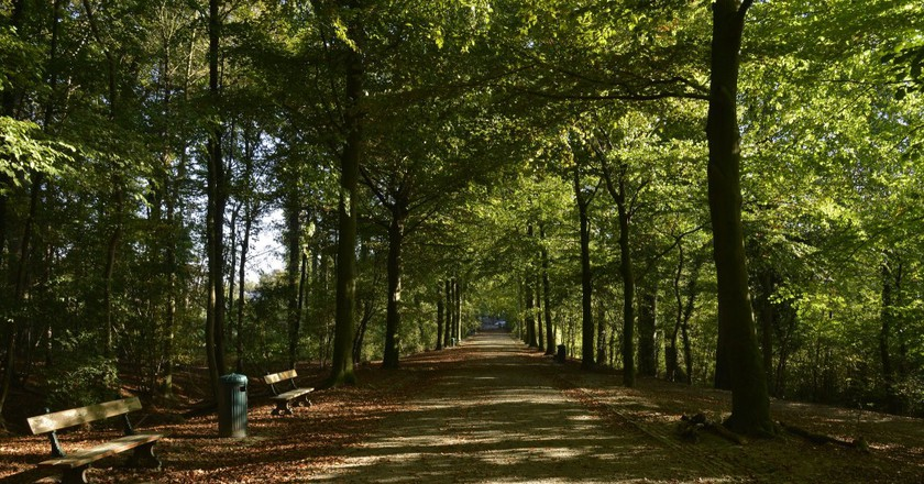 The main road of the Laerbeek woods, in the Koning Leopold Park | Stephane Mignon/Flickr
