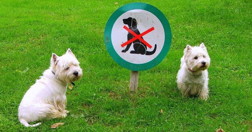 No dogs allowed | © olaszmelo/Flickr