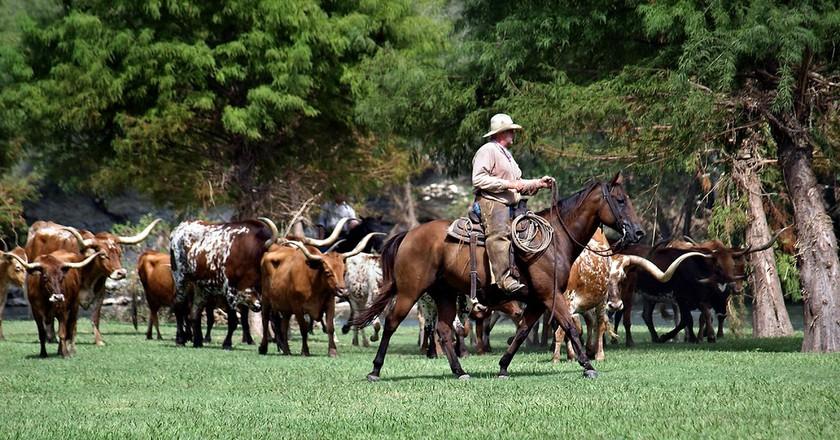 Chisholm Trail Cattle Drive   © Anne Worner/Flickr