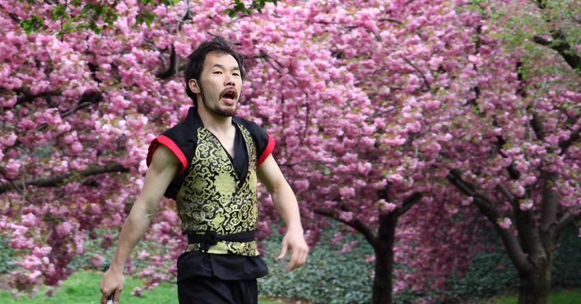 Cherry Blossom Festival  © Paul Stein/flickr