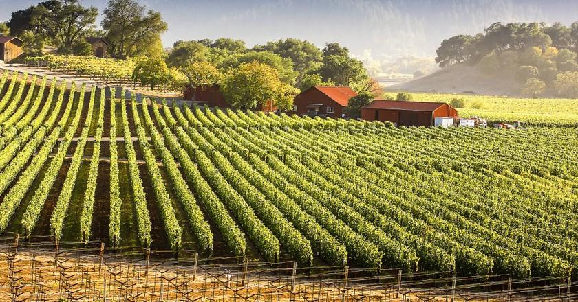 Napa Vineyards © James Daisa/Flickr