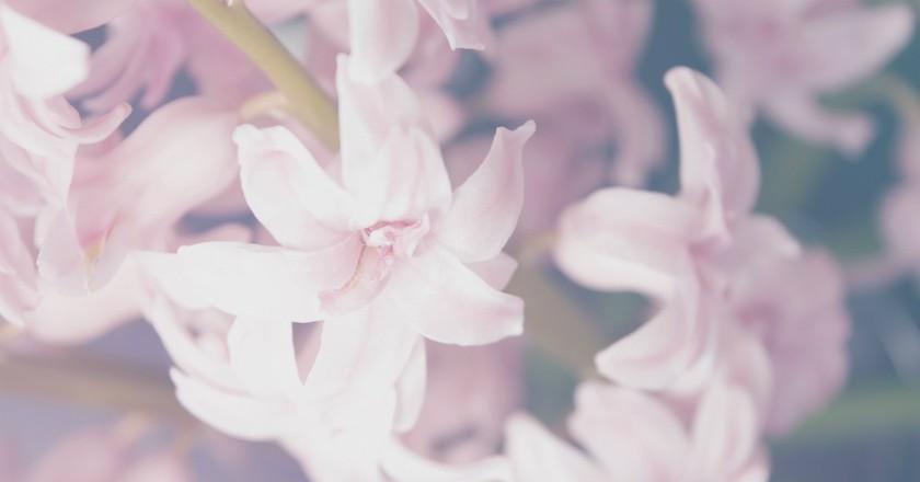 Flowers   © Aleksandar Radavonovic / Unsplash