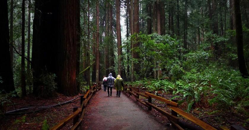 Muir Woods © Stephen Kennedy/Flickr