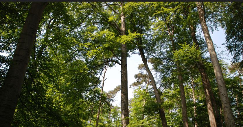 Forêt de hêtres (Soignes forest - Brussels) | Stephane Mignon/Flickr