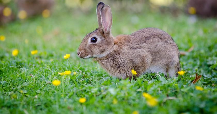 Rabbit | © Mathias Appel/Flickr