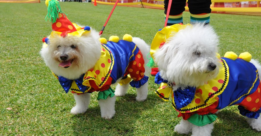 Dogs | © Mosman Council/Flickr
