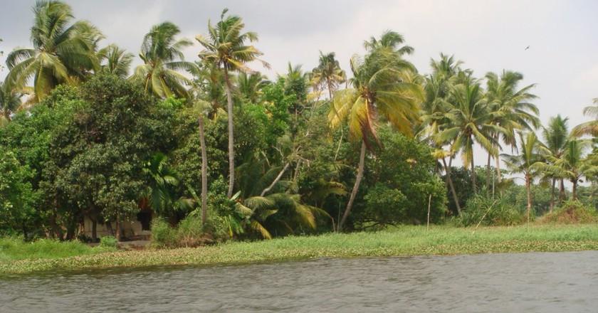 The palms surrounding the backwaters | ©Roshni Subudhi