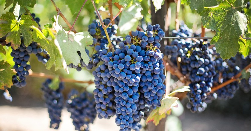 Purple Grapes | © Mark III/Pixabay