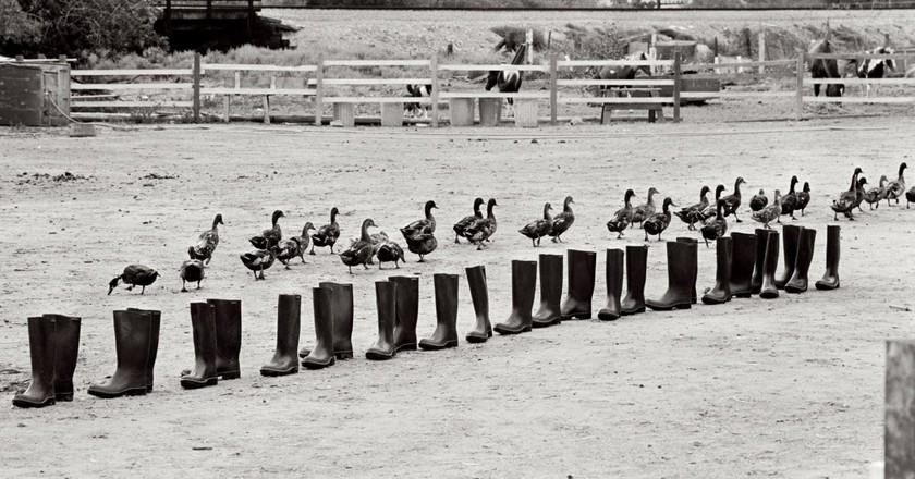 Eleanor Antin 100 BOOTS Move On Sorrento Valley, California. June 24, 1972, 8:50 am (mailed:  December 9, 1972)  Courtesy Ronald Feldman Fine Arts, New York