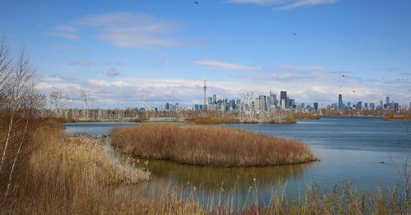 Wildlife Toronto | © City of Toronto/Flickr