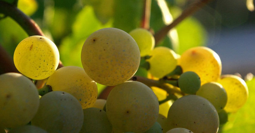 The Most Beautiful Spanish Wine Regions You Should Know