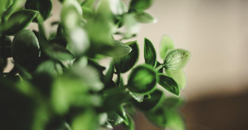 Eco. | © Γιώργης Χωραφάς/Flickr