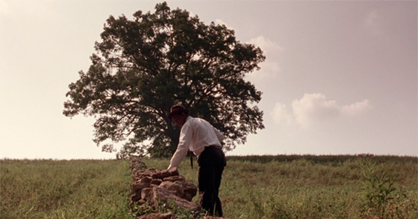 Morgan Freeman's Red approaches the iconic white oak (Columbia Pictures)