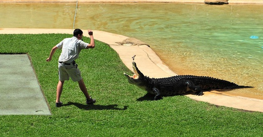 Crocoseum, Australia Zoo | © thinboyfatter / Flickr