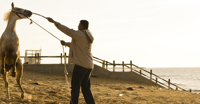 Horse training on Gaza Beach © Stefano/Flickr