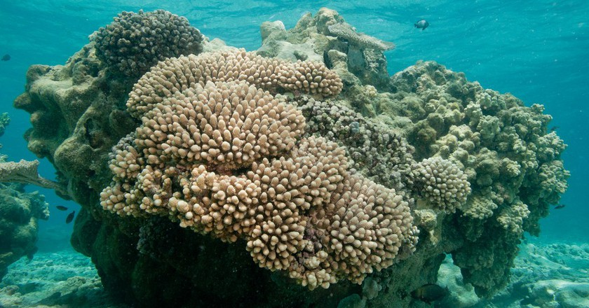 Coral reef, Shark Island lagoon, French Frigate Shoals, Papahanaumokuakea Marine National Monument   © USFWS - Pacific Region/Flickr