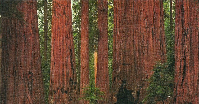 Sequoia National Park © Stephanie/Flickr