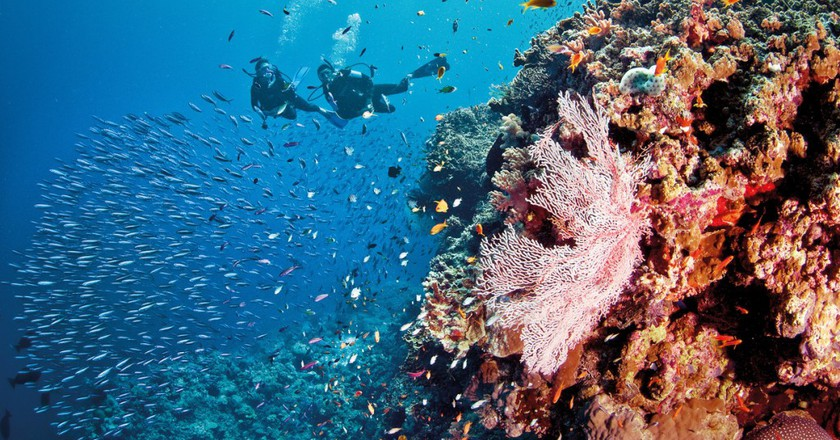 Pixies Garden, Ribbon Reef, Great Barrier Reef, QLD | Courtesy of Tourism and Events Queensland © Darren Jew