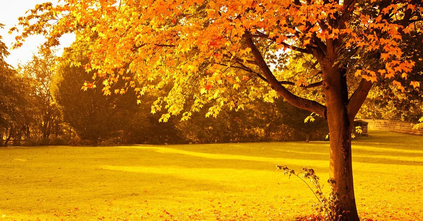 Where To Enjoy Fall Colors In And Around Chicago