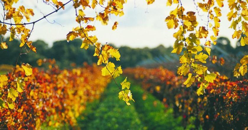 Swan Valley vineyards | Courtesy of Tourism Western Australia