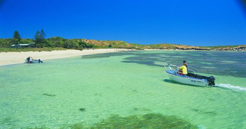 Penguin Island | Courtesy of Tourism Western Australia