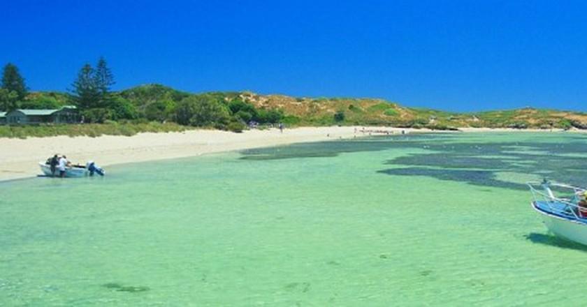 Penguin Island | Courtesy of Tourism Western Australia