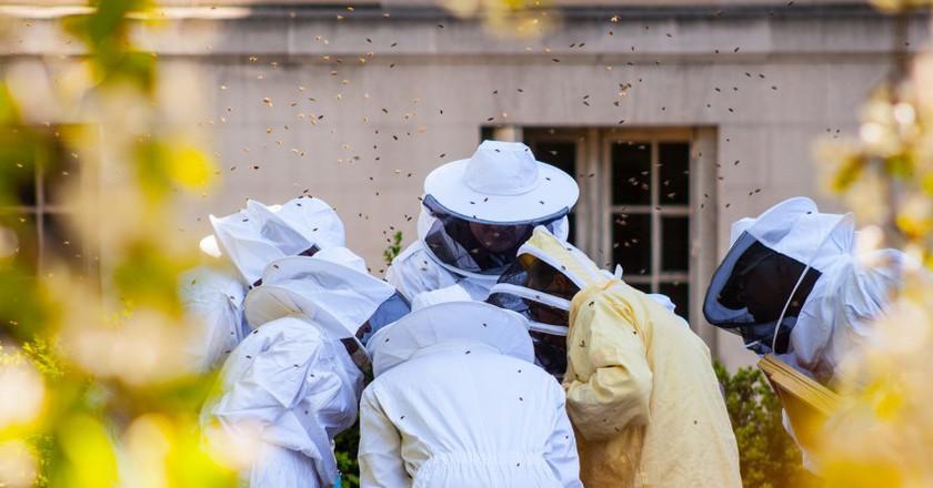 Beekeepers in Paris │© tangi bertin/Flickr