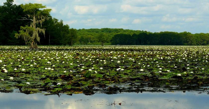 Caddo Lake | © Thomas & Dianne Jones/Flickr