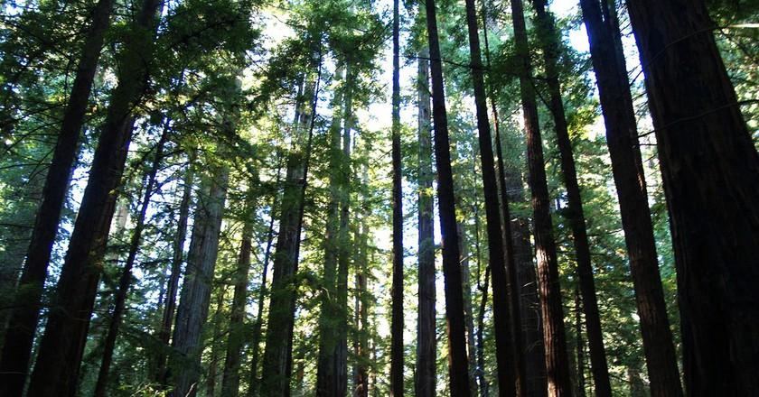 The redwoods © Ernest McGray, Jr./Flick