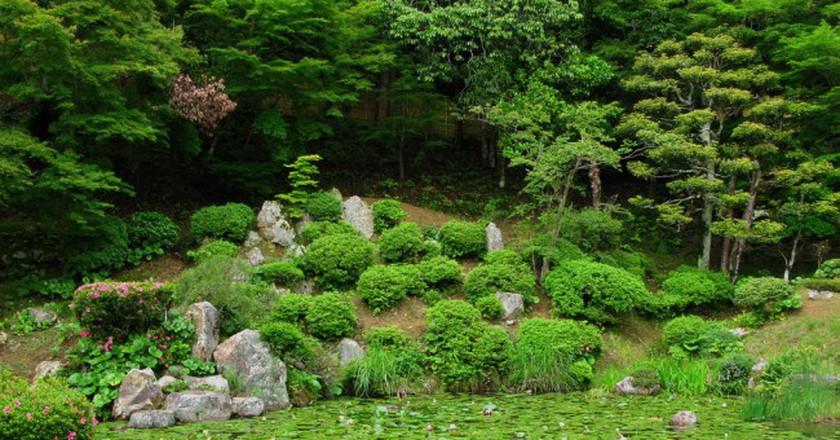 Lush garden | © eeems/Flickr