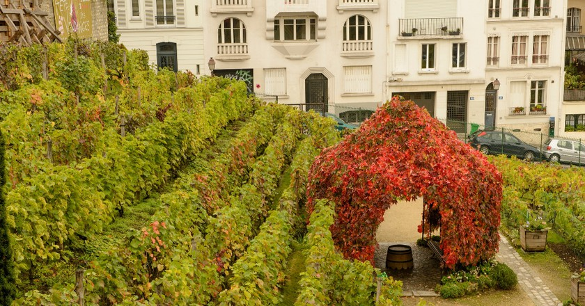 Clos de Montmartre │© Son of Croucho from Scotland/Wiki Commons