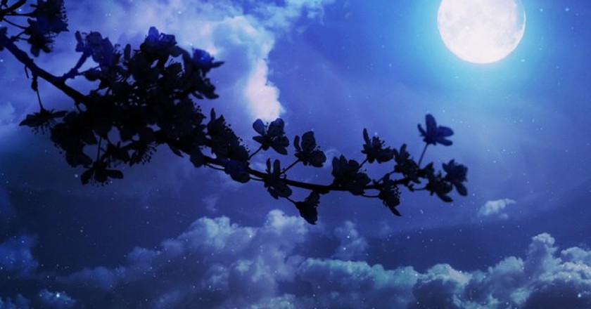 Renga must make reference to both flowers and the moon | © Adina Voicu/Pixabay