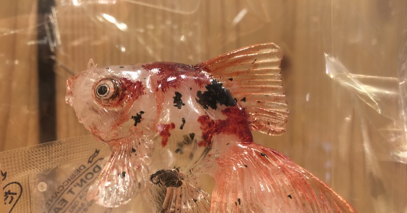 A mottled goldfish amezaiku sculpture from Ameshin   © Alicia Joy