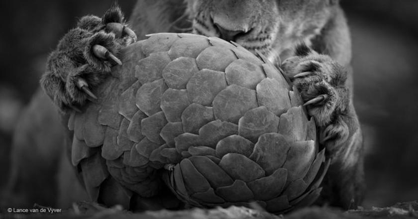 © Lance van de Vyver / Wildlife Photographer of the Year