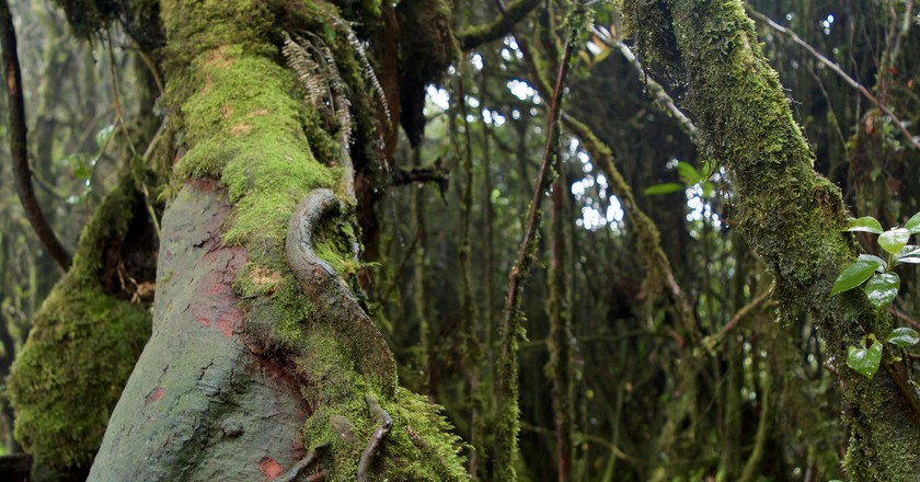 Mossy Forest | © Courtesy of Kelly Iverson