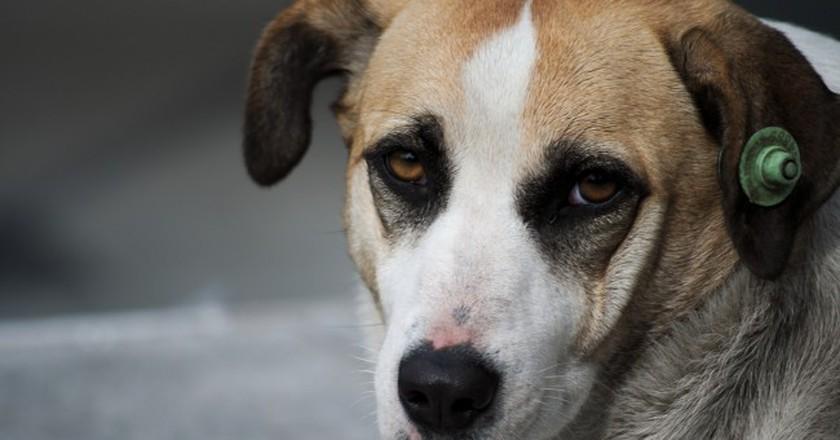 Dog   © Can Mustafa Özdemir/Flickr