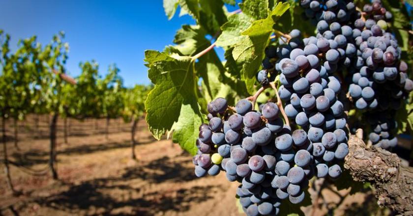 Vineyard | ©  (matt)/Flickr