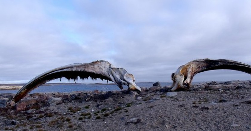 The heads of two whales © Mike Beauregard/Flickr