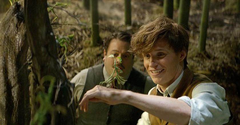 Fantastic Beasts | © Warner Bros.