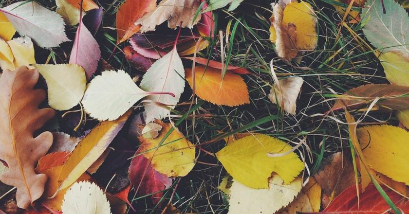 Fall © Pexels
