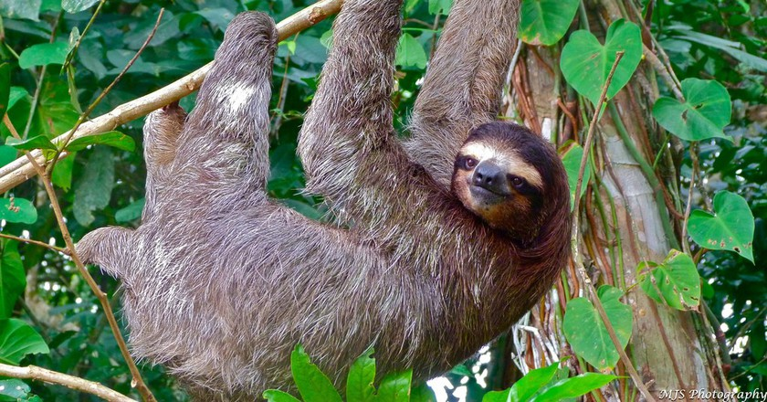 An Animal Lover's Top 10 Nature Adventures in Panama City