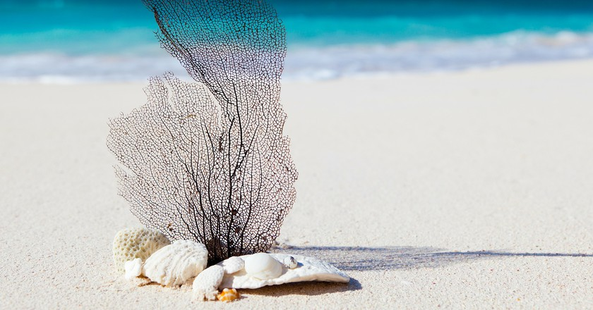 Beach | Public Domain Image
