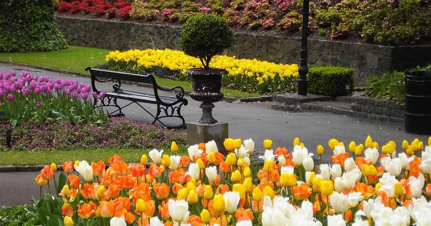 Wellington Botanic Gardens   © Denis Bin/Flickr