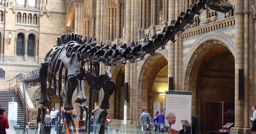 Diplodocus (replica) in the Natural History Museum of London | © Drow male/WikiCommons
