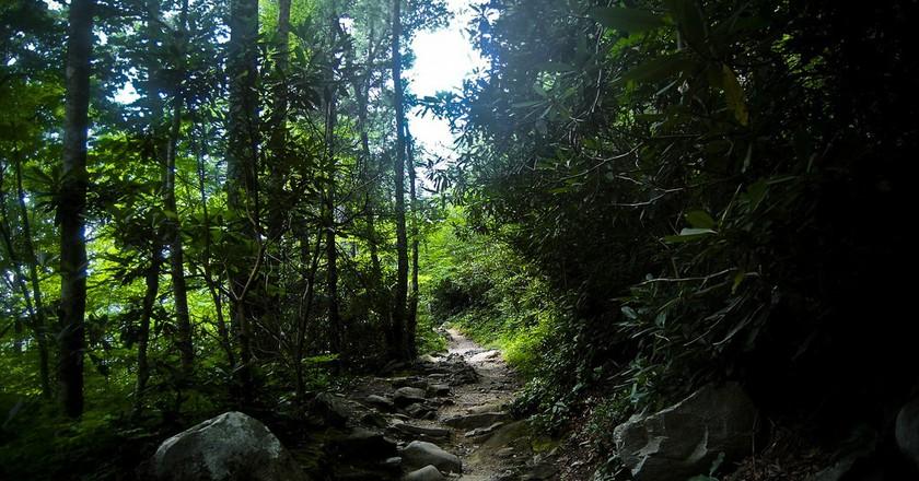 Rainbow Falls Trail in Tennessee / (c) Nathan Cullitan / Flickr