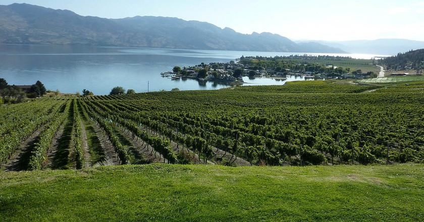 Okanagan Valley Winery © Kelowna09 / Flckr