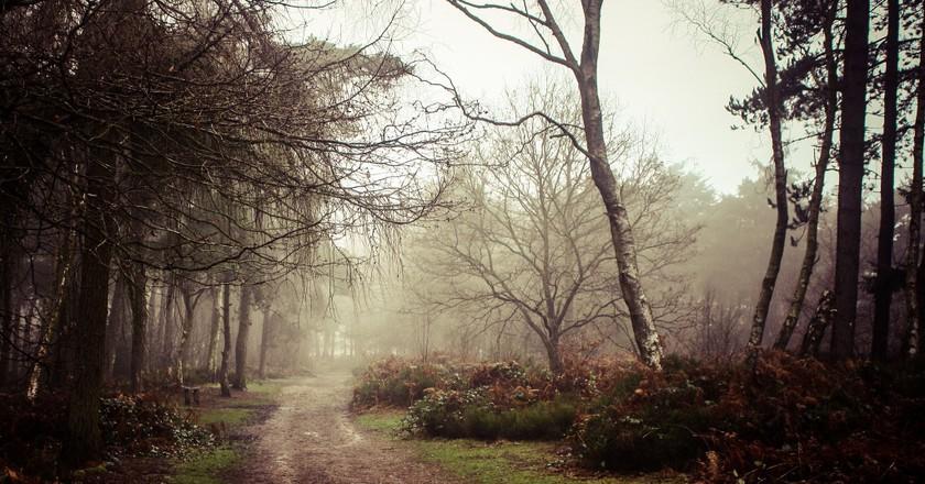 Lickey Hills walking trail   © Adam Hinett/Flickr